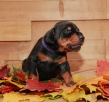 Via Felicium I-male with violet ribbon-14 days (3)